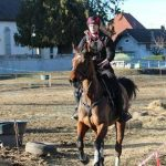 Destockage: Formation bpjeps equitation bretagne | Test & opinions