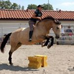 En réduction: Bridon licol poney | Test complet